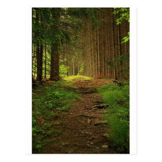 Carte Postale Chemin d'arbre de sapin