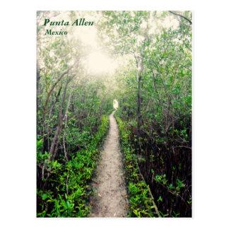 Carte Postale Chemin de plage de Punta Allen