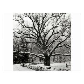 Carte Postale Chêne New York City de Bedford d'arbre