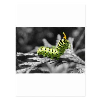 Carte Postale chenille de persil noire et blanche