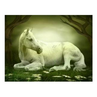 Carte Postale Cheval Arabe gris