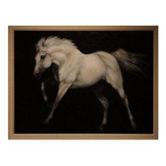 Carte Postale Cheval blanc