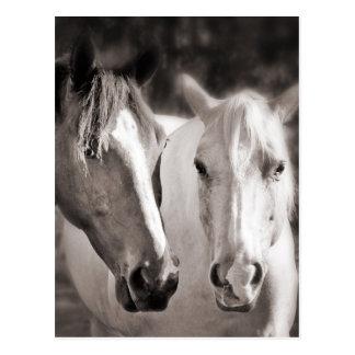 Carte Postale Cheval blanc de sépia de chevaux de Brown