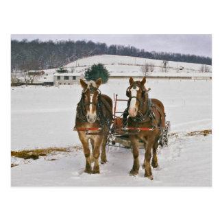 Carte Postale Cheval-Carte postale amish d'une traite d'hiver