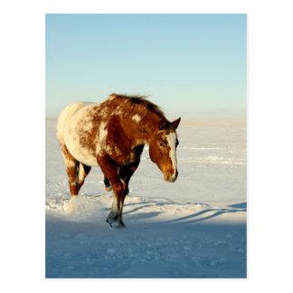 Carte Postale cheval dans la neige