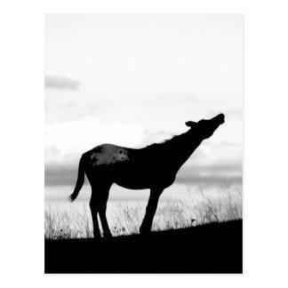 Carte Postale Cheval de coyote
