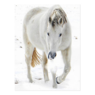 Carte Postale cheval de neige