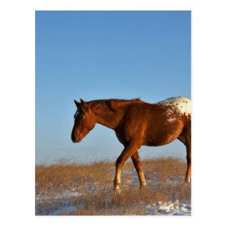 Carte Postale Cheval de prairie