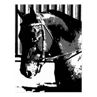 Carte Postale Cheval d'étalon de BW