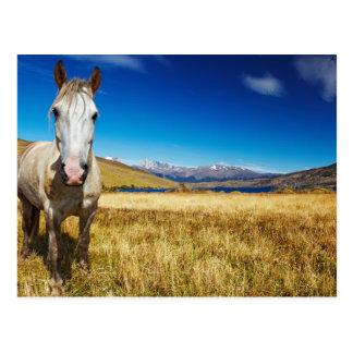 Carte Postale Cheval en parc national de Torres del Paine,