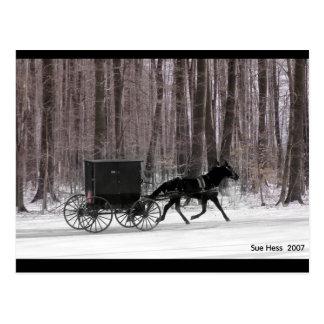 Carte Postale Cheval et boguet amish