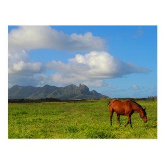 Carte Postale Cheval hawaïen