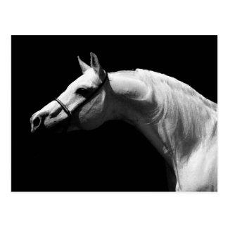 Carte Postale Cheval noir et blanc