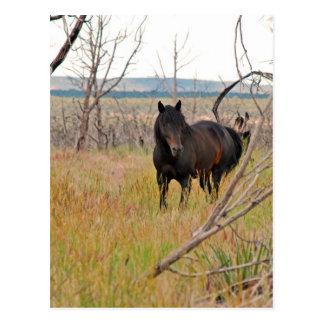 Carte Postale cheval sauvage dans le MESA Verde