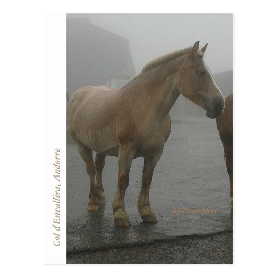 Carte postale cheval sous la pluie