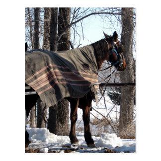Carte Postale Chevaux amish attendant en hiver