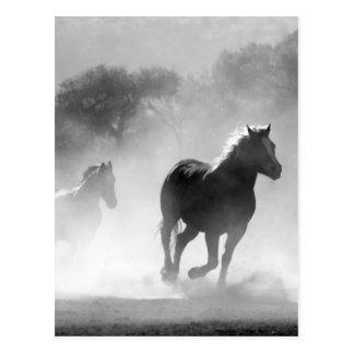 Carte Postale Chevaux courant le beau paysage noir et blanc