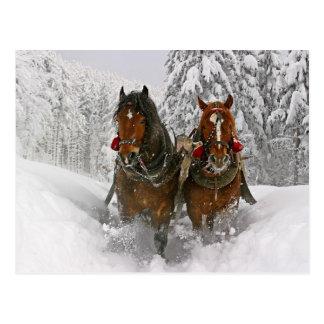 Carte Postale Chevaux de Noël