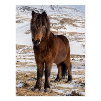 Carte Postale Chevaux islandais en hiver