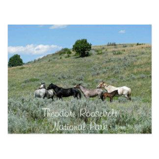 Carte Postale Chevaux sauvages, Theodore Roosevelt NP, le Dakota