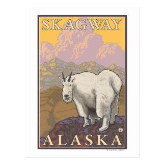 Carte Postale Chèvre de montagne - Skagway, Alaska