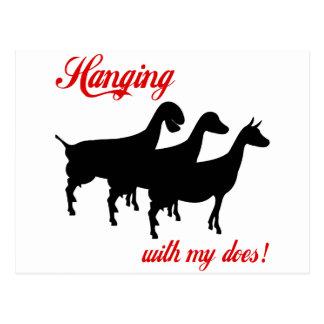 Carte Postale Chèvres de laiterie