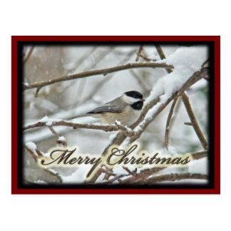 Carte Postale Chickadee couvert par noir de Noël dans la neige