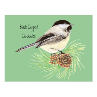Carte Postale Chickadee couvert par noir - oiseau - nature