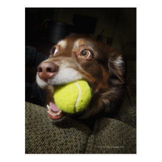 Carte Postale Chien avec de la balle de tennis
