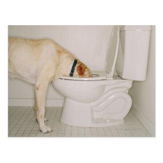 Carte Postale Chien buvant hors de la toilette