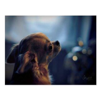 Carte postale , chien chihuahua
