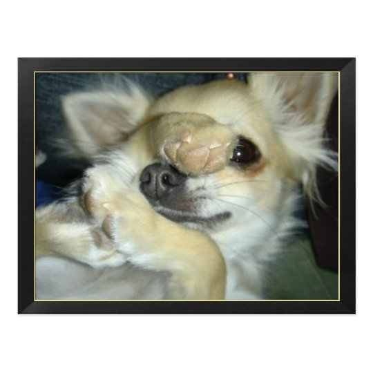 Carte postale chien chihuahua humour