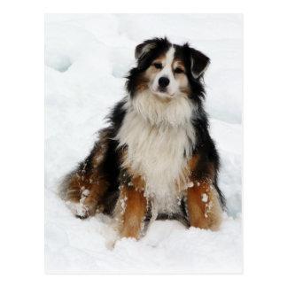 Carte Postale Chien de berger australien dans la neige