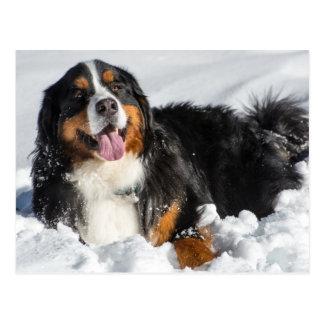 Carte Postale Chien de montagne de Bernese heureux dans la neige