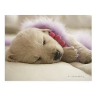 Carte Postale Chien dormant sur le lit