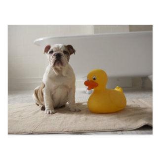 Carte Postale Chien sur le tapis avec le canard en plastique