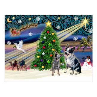 Carte Postale Chiens australiens magiques de bétail de Noël