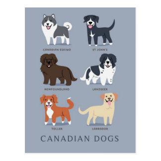 Carte Postale Chiens canadiens