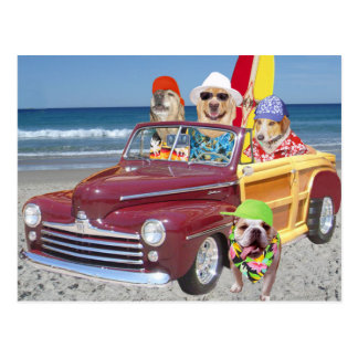 Carte Postale Chiens/laboratoires sur la plage dans un Woodie