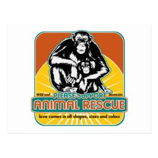 Carte Postale Chimpanzé animal de délivrance