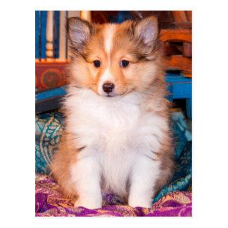 Carte Postale Chiot de chien de berger de Shetland se reposant