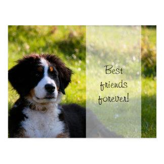 Carte Postale Chiot de chien de montagne de Bernese sur l'herbe