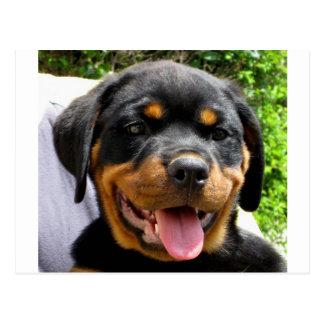 Carte Postale Chiot de rottweiler