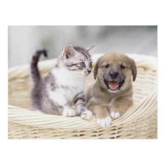 Carte Postale Chiot et chat de bébé