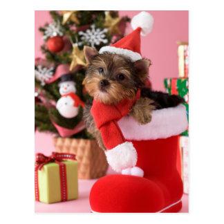 Carte Postale Chiot et Noël de Yorkshire Terrier