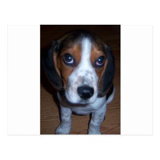 Carte Postale Chiot excité de beagle de chien idiot