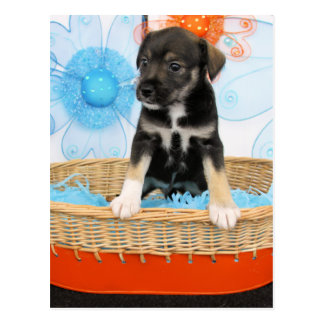Carte Postale Chiot - Jack Russell