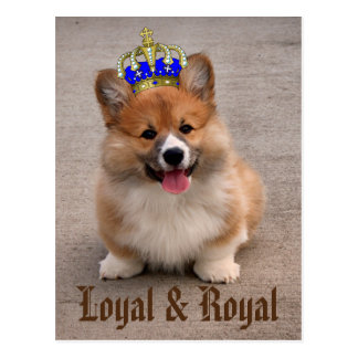 Carte Postale Chiot loyal et royal de corgi