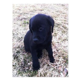 Carte Postale Chiot noir de labrador retriever