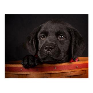Carte Postale Chiot noir de labrador retriever dans un panier